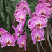 The Orchid Garden - NYBG