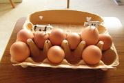 3rd Mar 2021 - the eggcellent vantage point