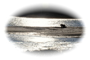 3rd Mar 2021 - Low tide clamming............