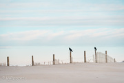 3rd Mar 2021 - Life On The Dunes