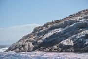 4th Mar 2021 - Schouten Island Cruise (32)