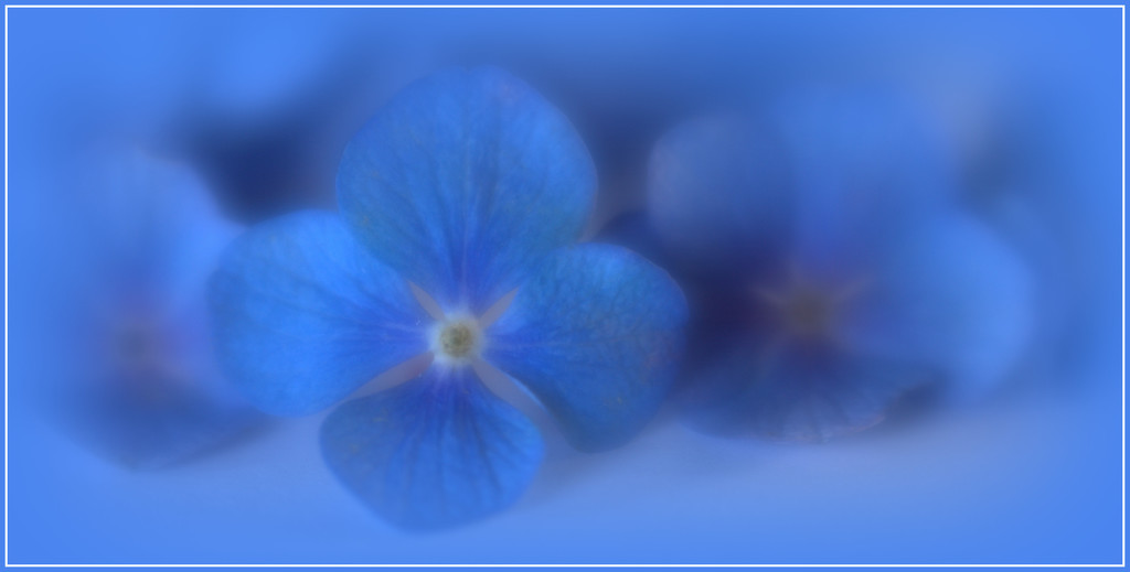 Blue by dide