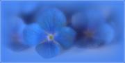 4th Mar 2021 - Blue