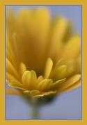 3rd Mar 2021 - Yellow 1 - Wednesday