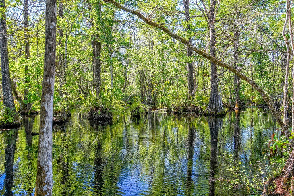 Deep in the Swamp by danette