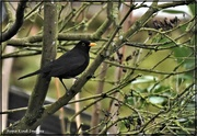 4th Mar 2021 - Bobbie Blackbird