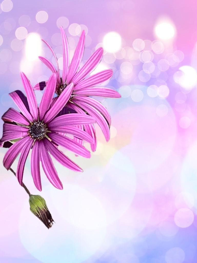 Bokeh flowers  by kathyboyles