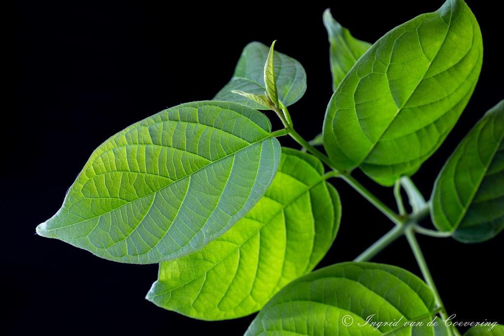 Leaves...  by ingrid01