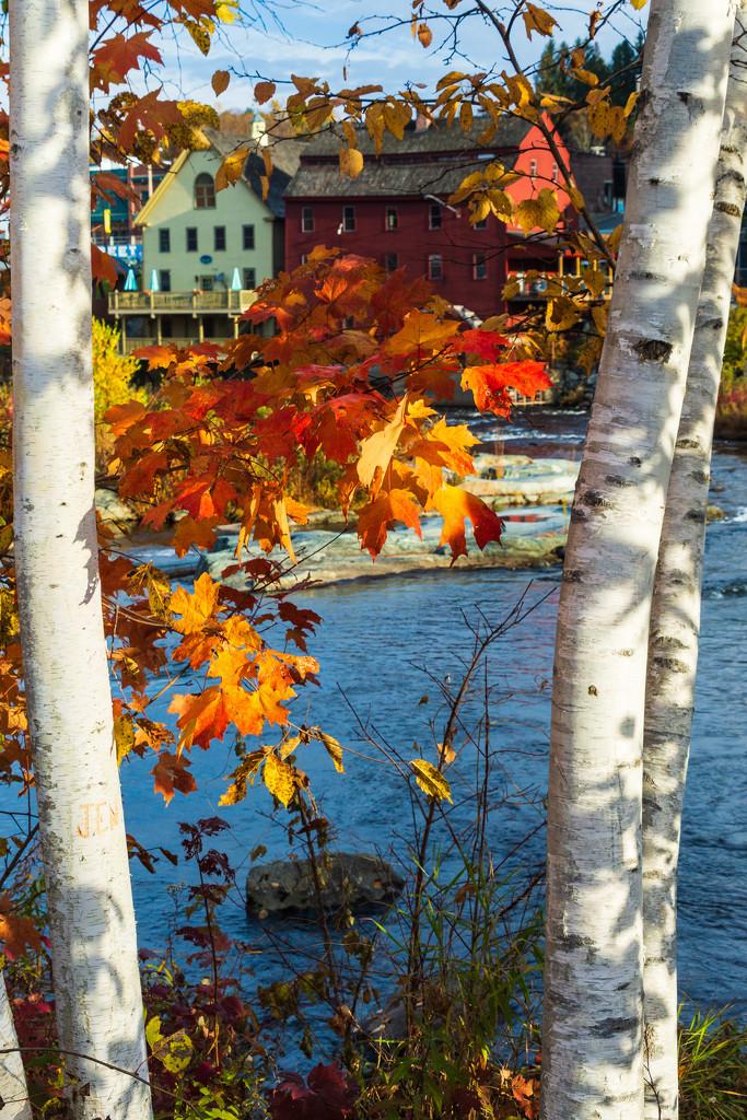 Looking Through Fall by photograndma