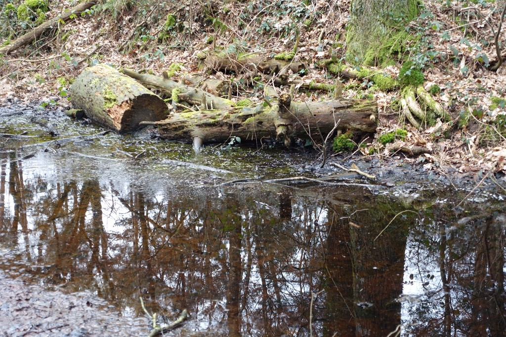 Fallen boughs and tree reflections by s4sayer