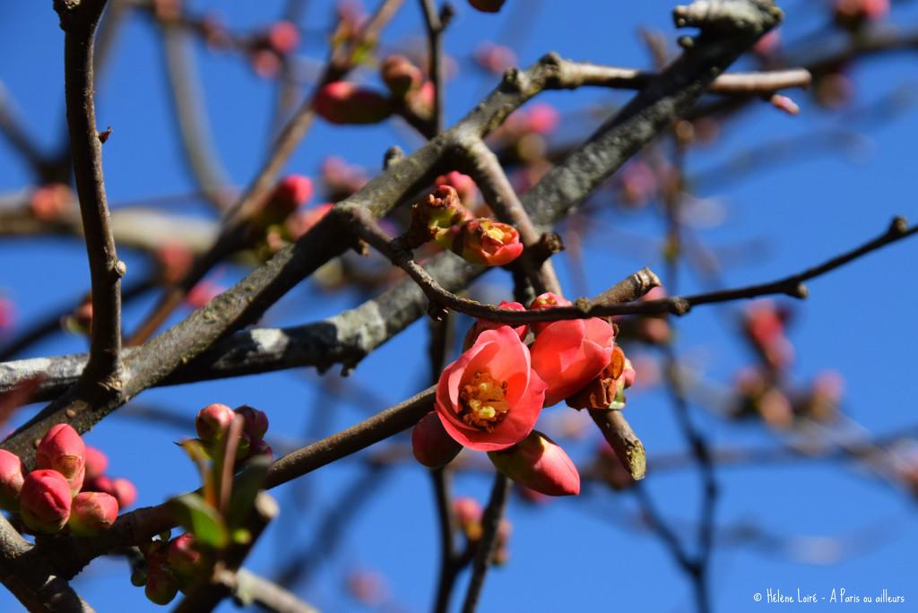 Spring has sprung by parisouailleurs