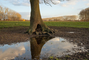 26th Feb 2021 - The tree and its reflection