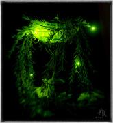 4th Mar 2021 - Firefly Glow