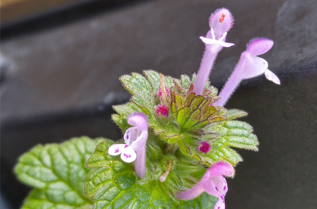 My 3rd wildflower find of spring... by marlboromaam