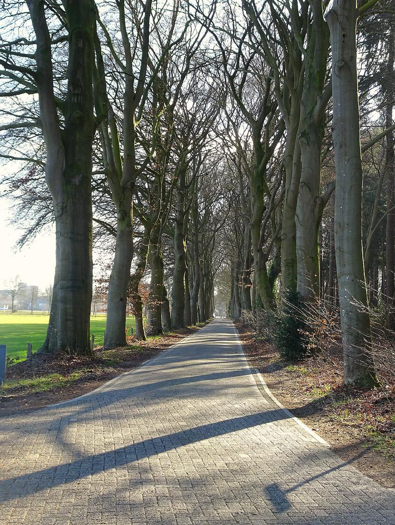 avenue of trees by gijsje