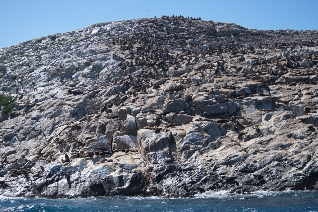 Schouten Island Cruise (24) by kgolab