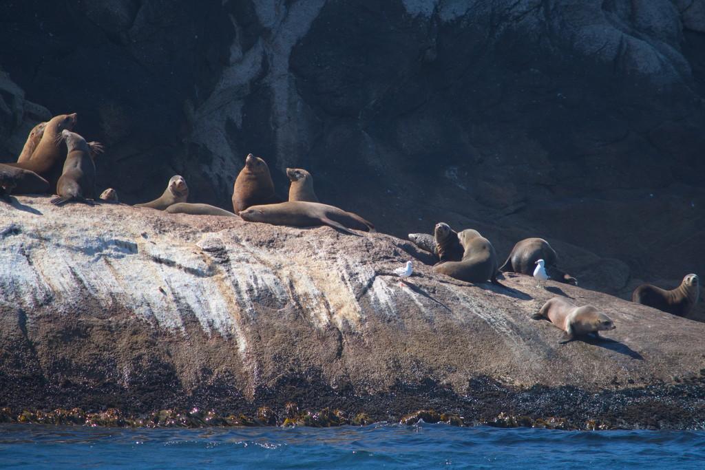 Schouten Island Cruise (26) by kgolab