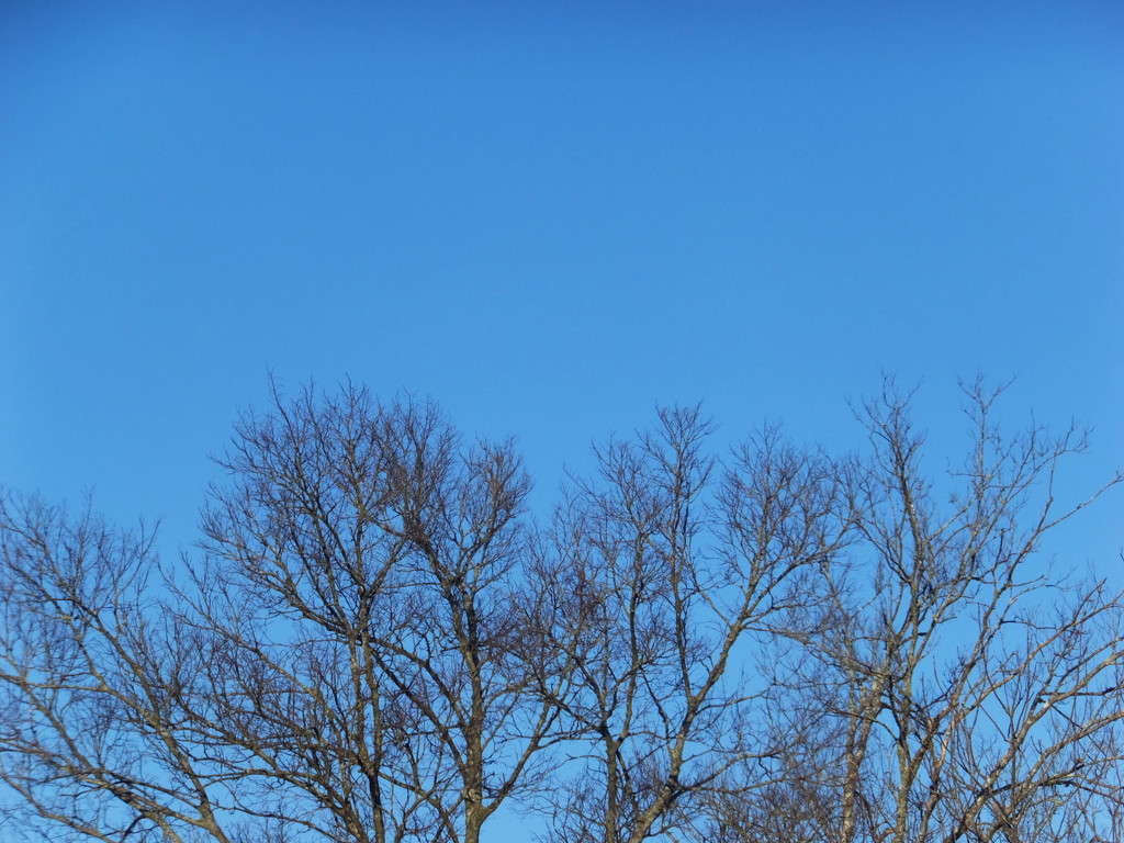 Blue Sky and Joy by linnypinny