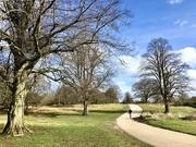 4th Mar 2021 - Walking the Dog..