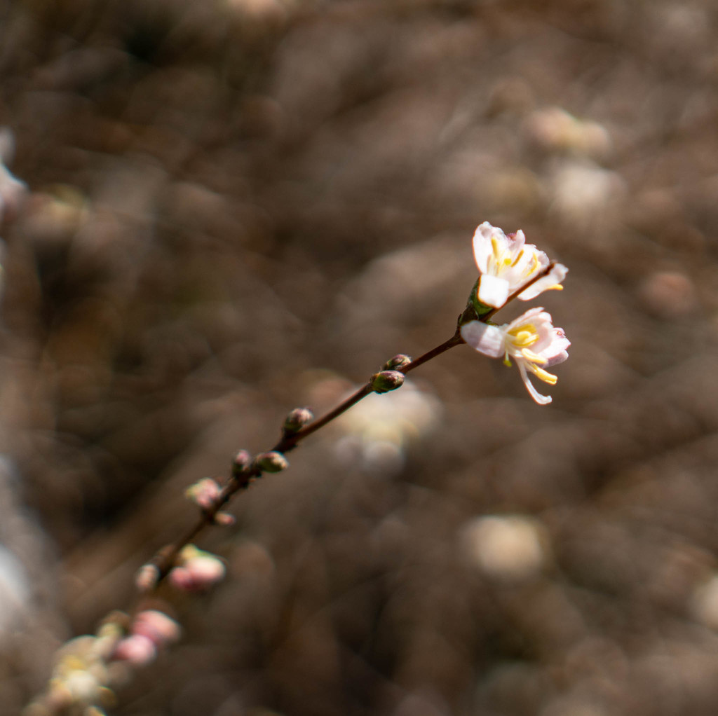 Flowering by randystreat