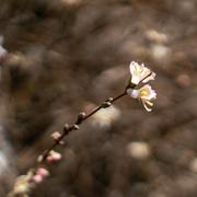 5th Mar 2021 - Flowering