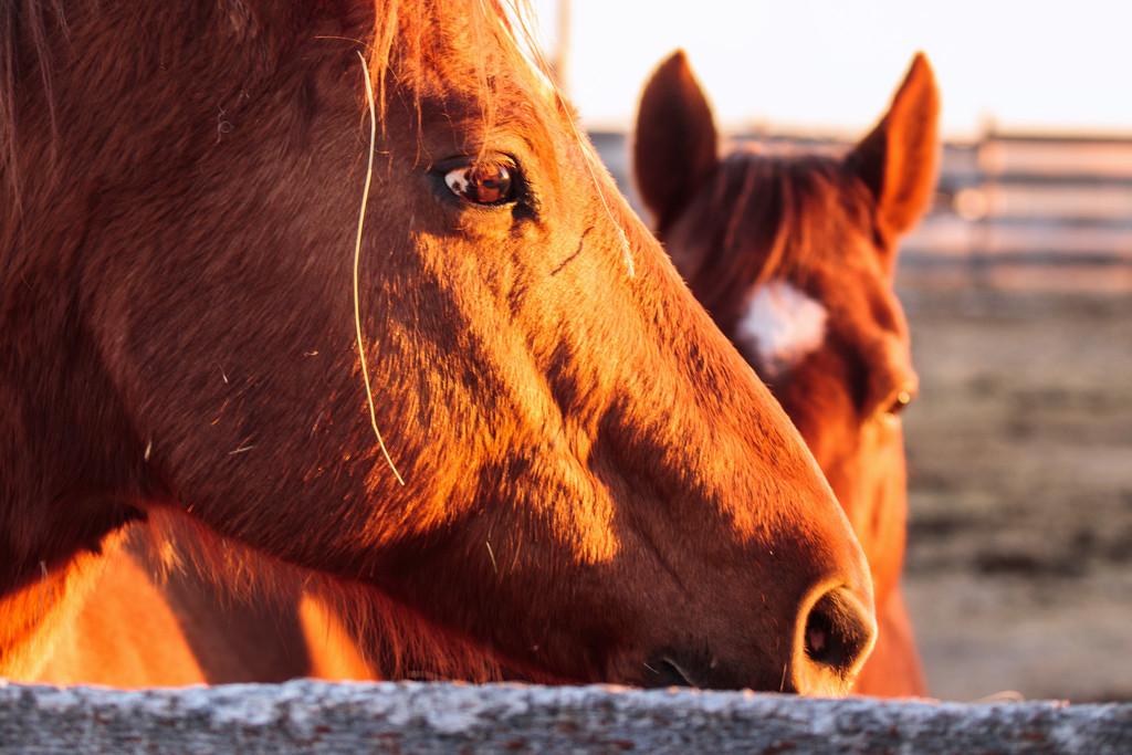 horses by aecasey