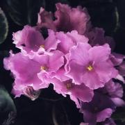 6th Mar 2021 - Purple 1
