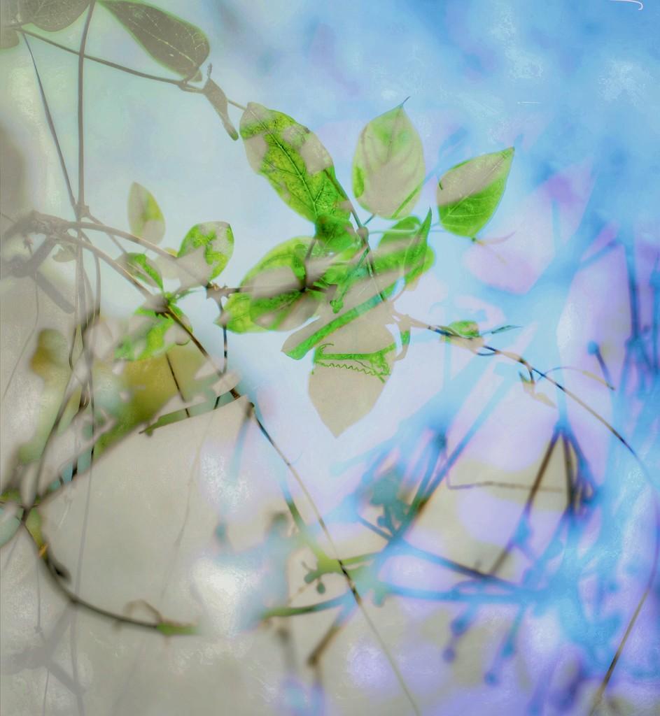 Botanica  by joemuli