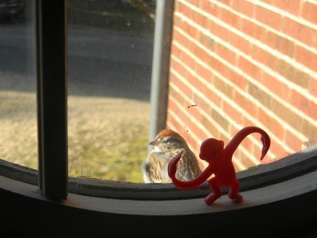 Bird and Monkey in Windowsill by sfeldphotos