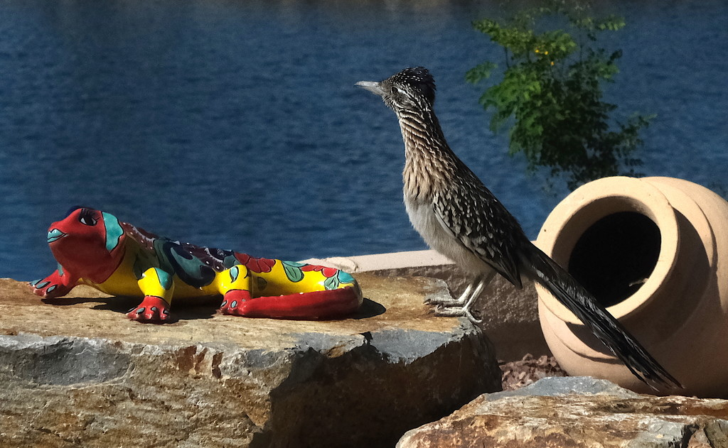 The Roadrunner and the Lizard by redy4et