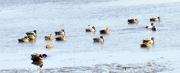 5th Mar 2021 - Ducky................