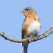 Little Blue Bird by lynne5477