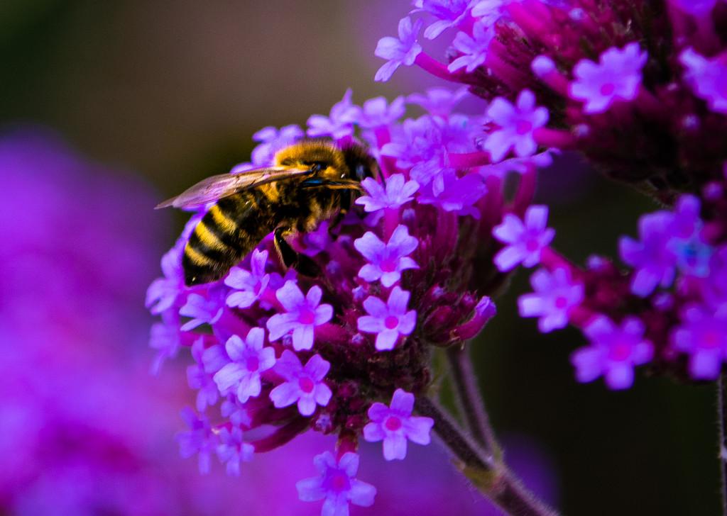 Rainbow purple by mave
