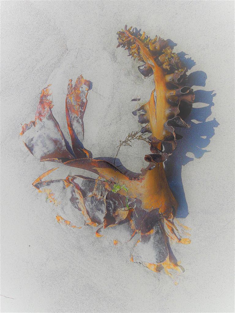 Kelp by etienne