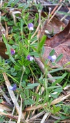 7th Mar 2021 - My 4th wildflower find of spring...