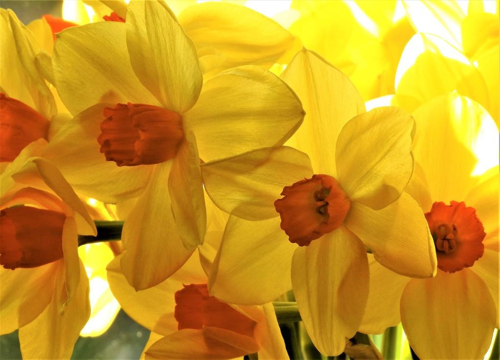 This Week's Tesco Flowers........ by susiemc