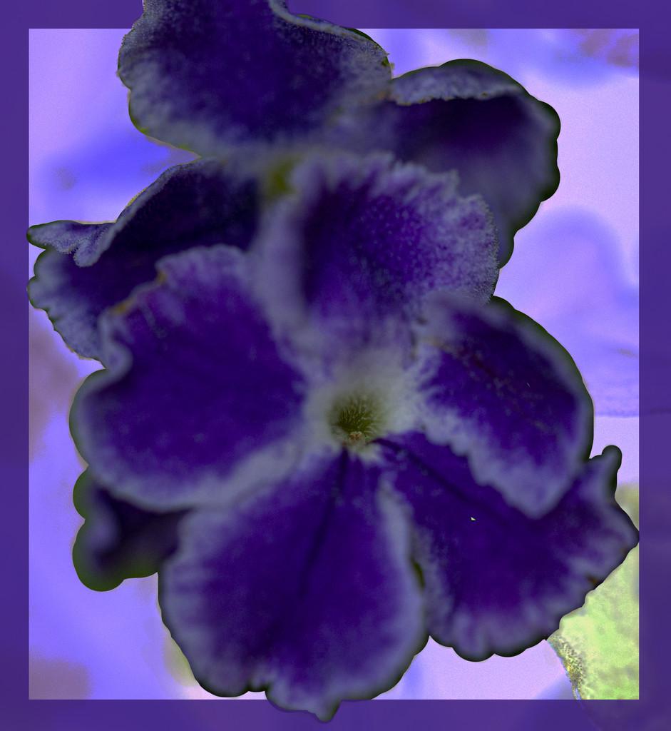 purple day by koalagardens