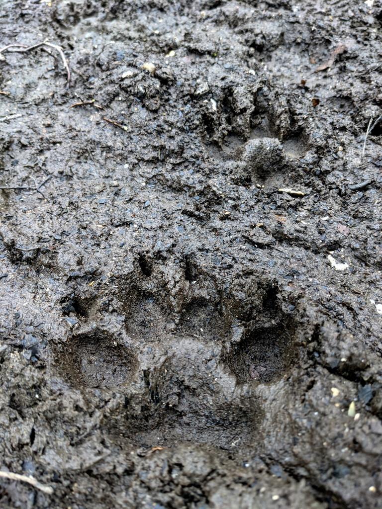Bear Prints by bulldog