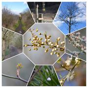6th Mar 2021 - Spring walk