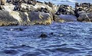 7th Mar 2021 - So many seals