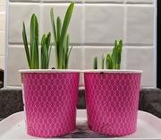 7th Mar 2021 - Pink Pots