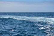 7th Mar 2021 - Schouten Island Cruise (35)