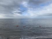7th Mar 2021 - Intrepid swimmers