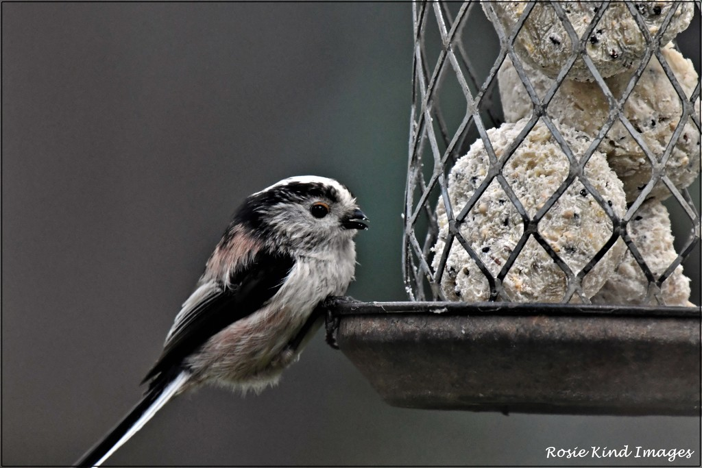 Isn't this little bird a sweetie by rosiekind