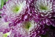 6th Mar 2021 - Purple Flowers