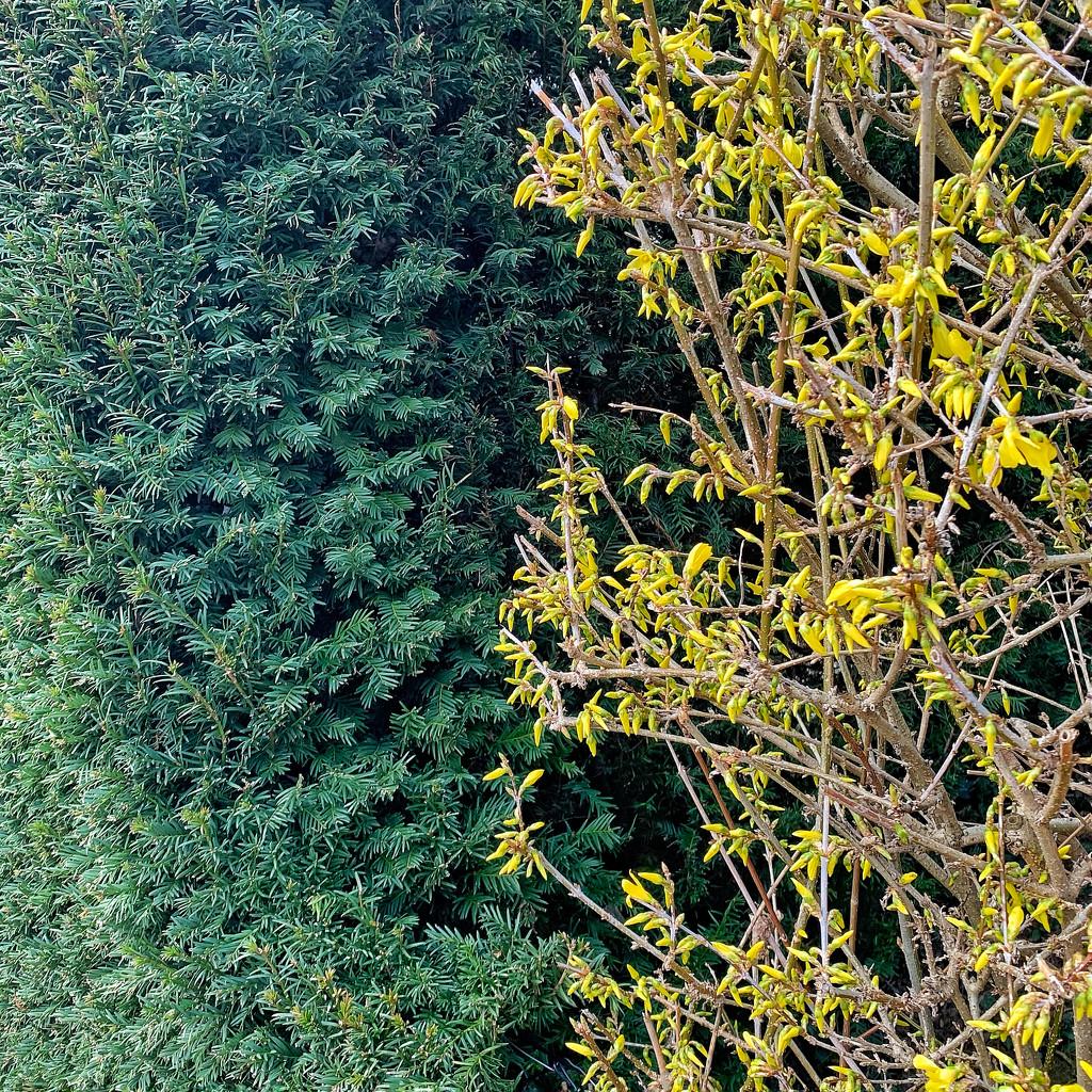 Half green / half yellow.  by cocobella