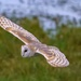 Ghost Bird. by padlock