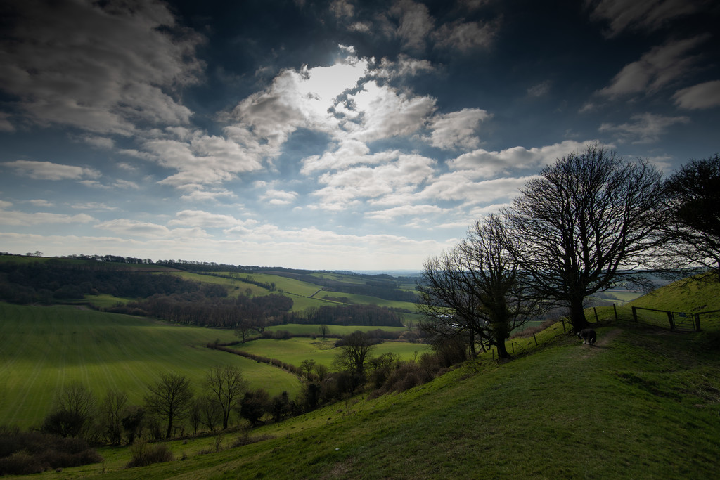 Bulbarrow Hill by pasttheirprime
