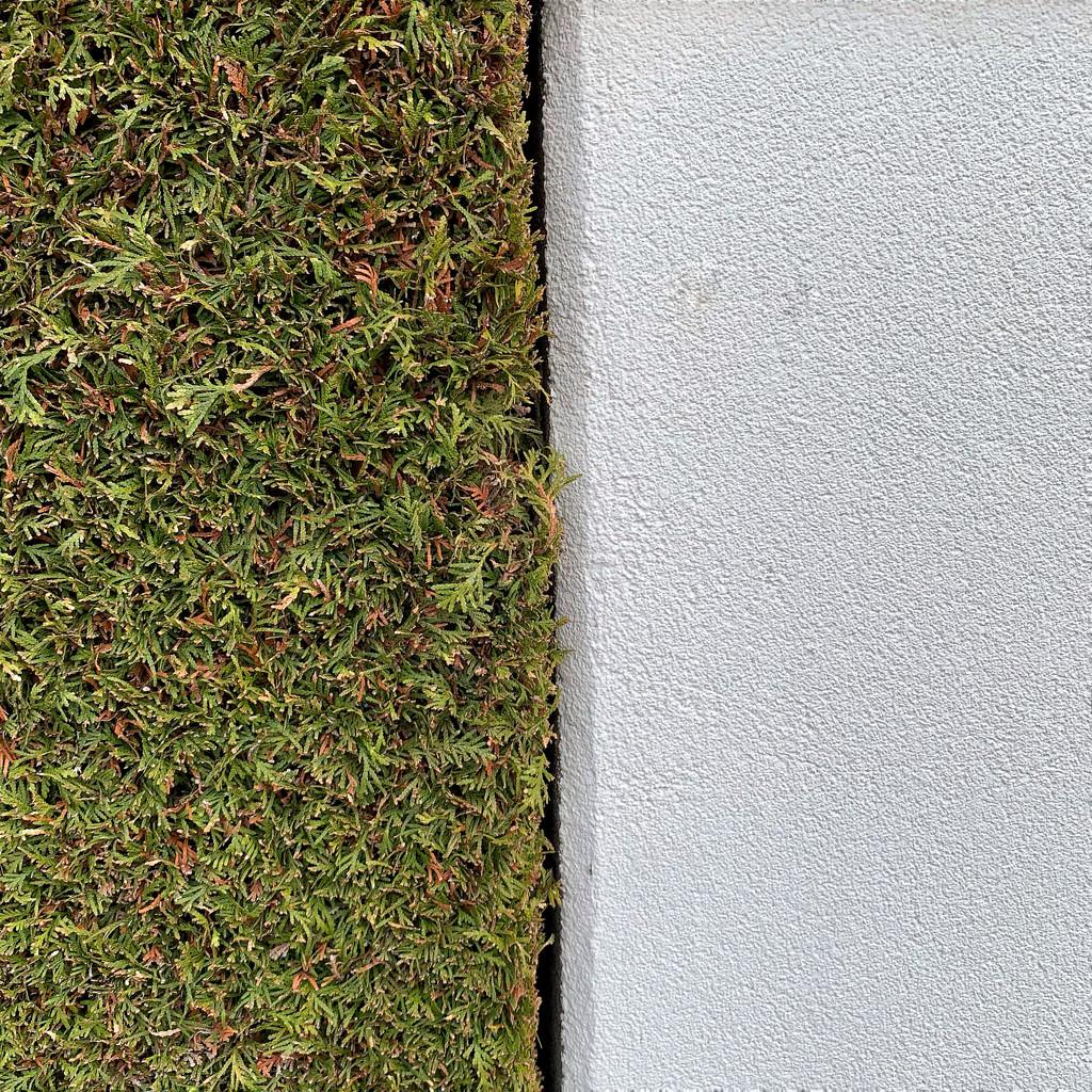 Half green / half wall.  by cocobella