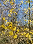 8th Mar 2021 - Yellow !